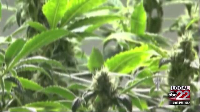 Vt. Governor's Marijuana Commission Schedules First Meeting