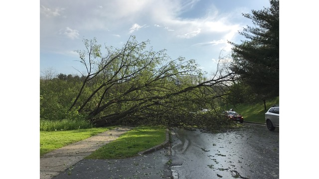 Vermont Department of Public Safety:  Tips for Safely Cleaning up After a Storm
