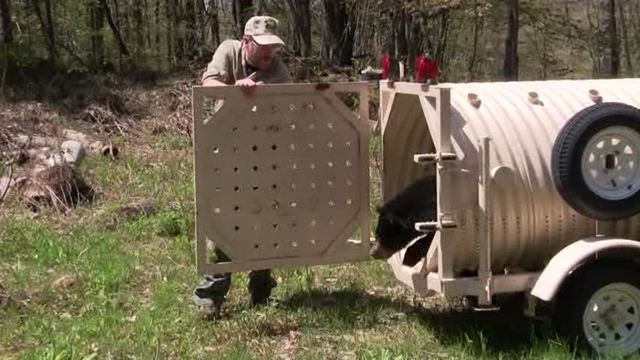 Video:  Vermont Fish & Wildlife Release Several Orphaned Bears Back to the Wild