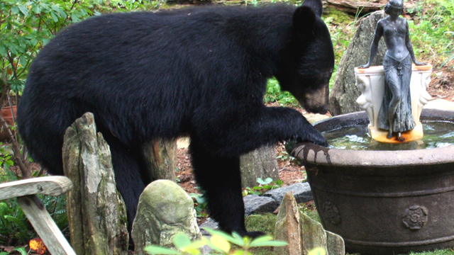 New Hampshire Couple Charged with Feeding Bears