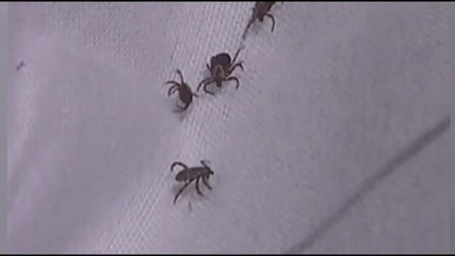 Federal Government Creating Working Group to Fight Lyme Disease