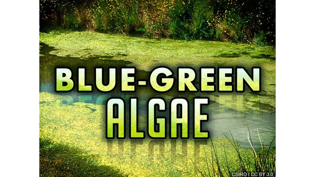 Algae Blooms Threaten New York Waterways