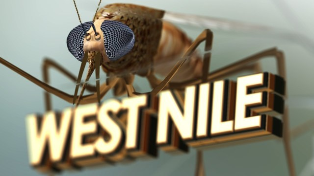 Another Case of West Nile Confirmed in Texas Panhandle