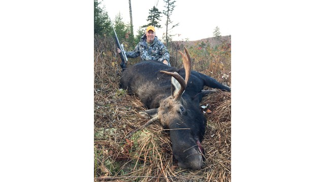 Vermont: Preliminary moose count for the 2017 hunting season